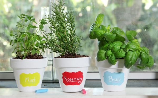 benjamin-moore-tintable-chalkbaord-paint-plants