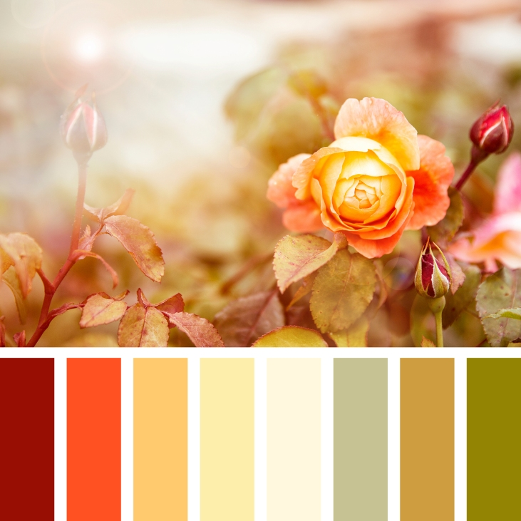 Yellow and red roses in sunlight, in a colour palette with compl
